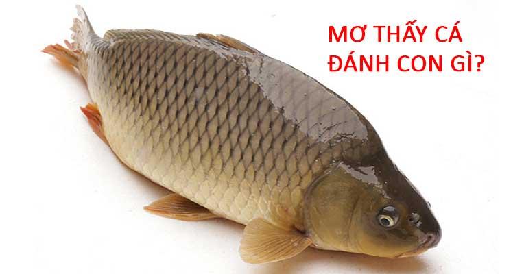 Nằm mơ thấy cá đánh con gì để ăn to trúng lớn lô đề?