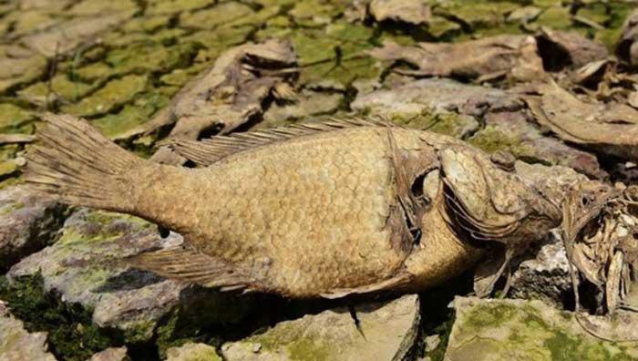 nằm mơ thấy cá chết khô