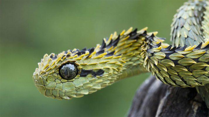 Nằm mơ thấy rắn báo mộng